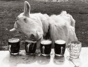 koza-na-pive.jpg