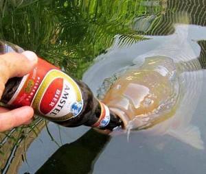 kapr-na-pivu.jpg