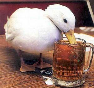 kachnicka-na-pivu.jpg